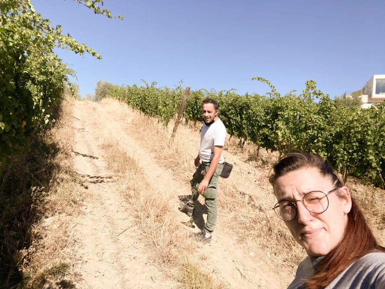 Read more about the article Cosa succede In vendemmia – parte 1